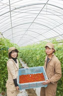 婚活 婿取り 農家 農業体験を組み込むケースが多い